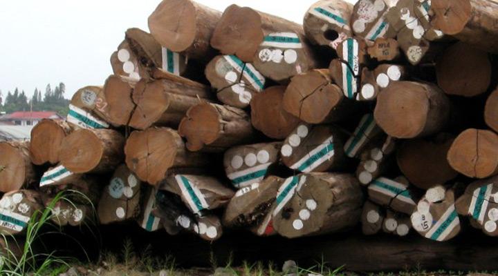 teak log pile