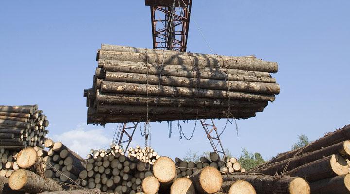 lumber log mill stacking wood logs
