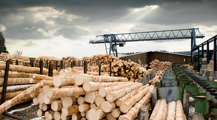 lumber mill with miles of logs