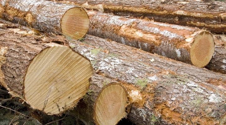 several fresh hewn logs on grass